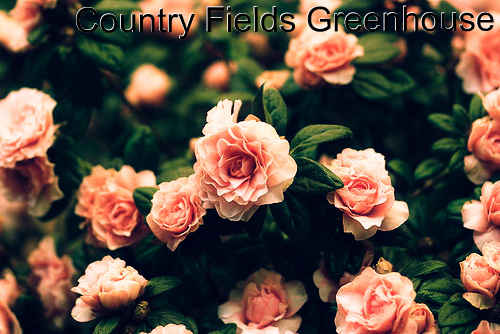 Country Fields Greenhouse