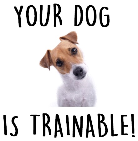 Your Dog Is Trainable